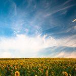 efficienza energetica risparmio energetico