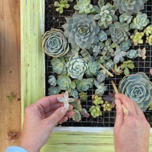 quadro con piante fai da te