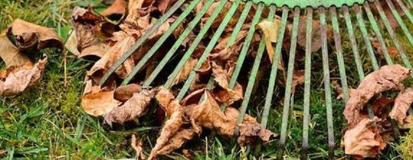 Come preparare la casa e il giardino all'autunno